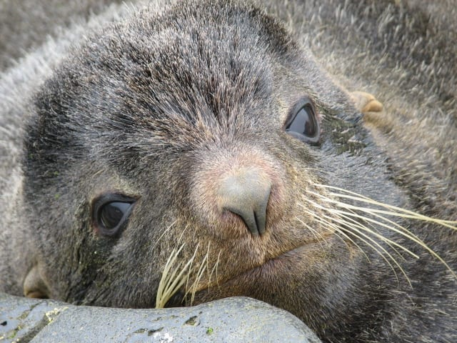 shore alaska explore seal